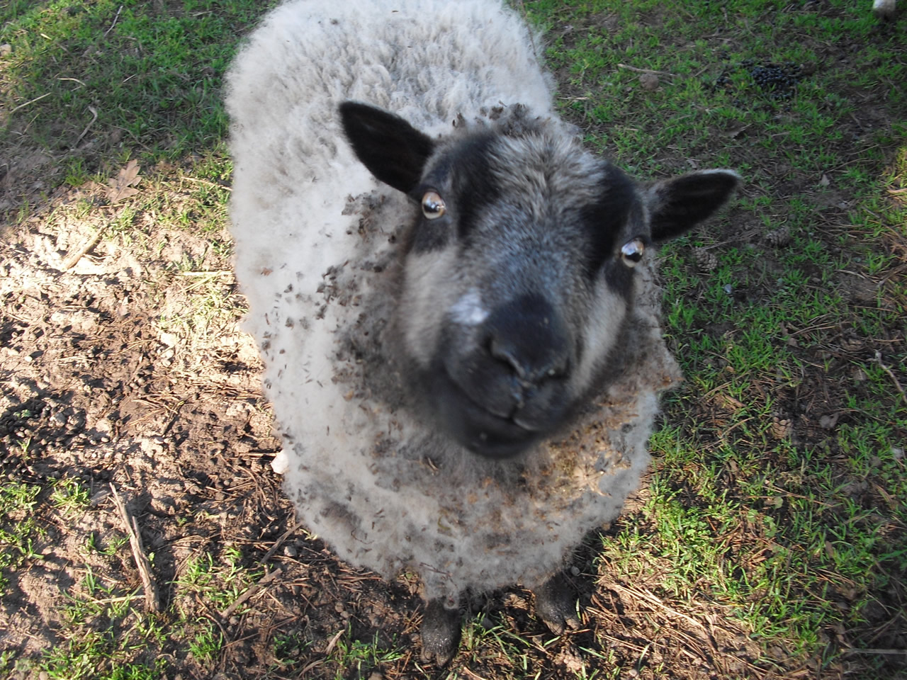 sheep ranch latin dating site One of the world's largest video sites, serving the best videos, funniest movies and clips.